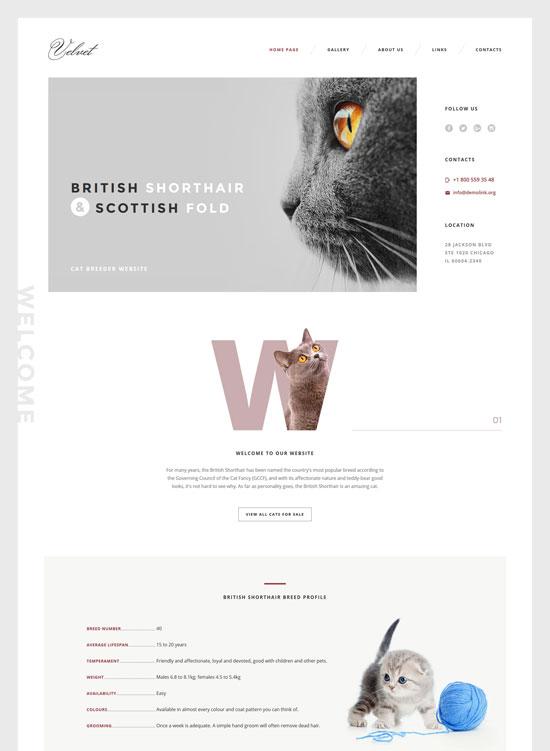cat pet responsive website template