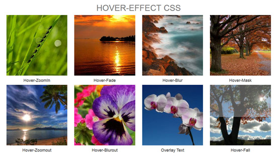 hover effect css bootstrap gallery